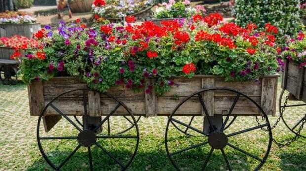Старая телега в качестве подставки для садовых растений