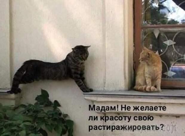 Возможно, это изображение (кот и текст «мадам! He желаете ли красоту свою растиражировать?»)