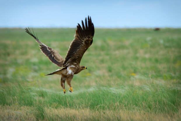 Заповедная Калмыкия: погружение в мир дикой природы