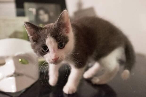 Мать закрывала собой единственного котенка, лежа среди мусора история, история спасения, коты, котята, кошки, помощь животным, спасение животных