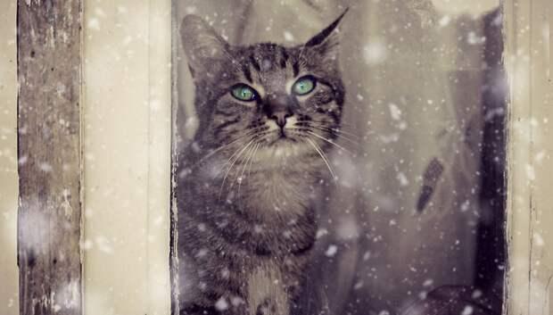 Устойчивый снежный покров на новогодних праздниках в Московском регионе не образуется