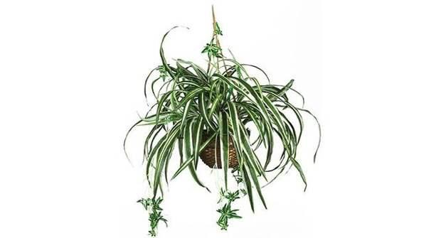 Растения, которые повышают влажность воздуха в квартире