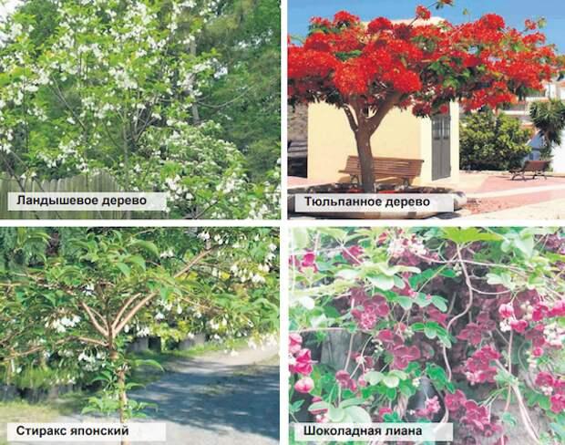 Необычные деревья для средней полосы
