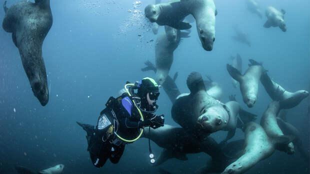 Дельфины-шпионы, тюлени-диверсанты и другие боевые животные