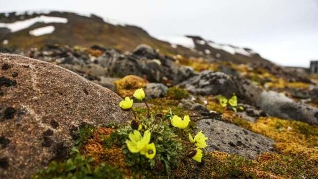 Подведены итоги первого этапа проекта повосстановлению арктических экосистем