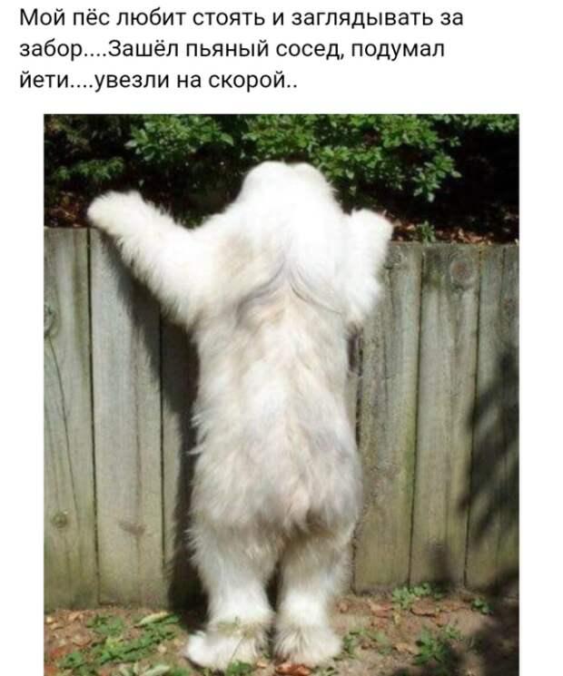 Забавные фотографии и смешные картинки с надписью из сети