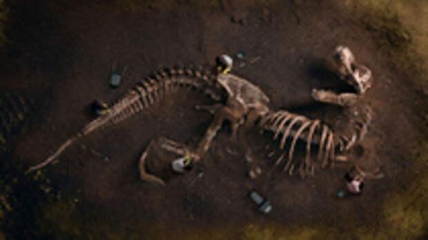 """Динозавр размером с """"боинг"""". В Аргентине нашли останки самых огромных ящеров в истории — фото"""