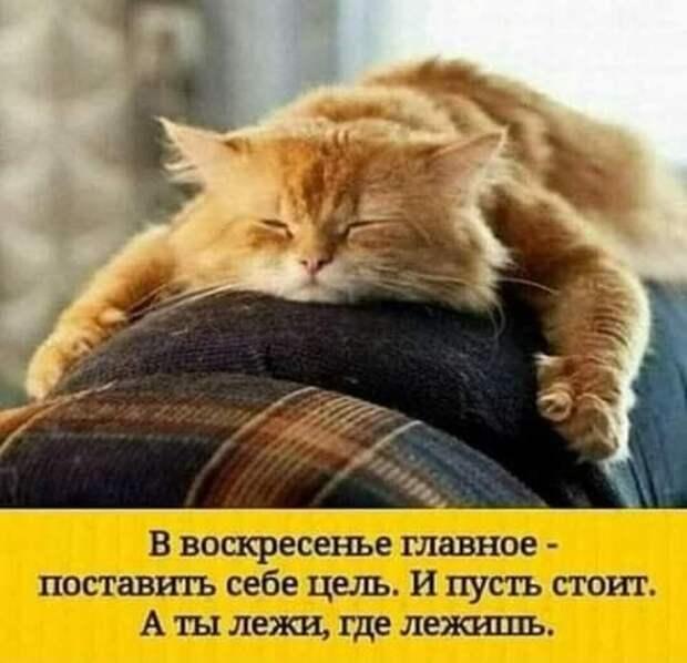 Возможно, это изображение (один или несколько человек, кот и текст «в воскресенье главное поставить себе цель. и пусть стоит. A ты лежи, где лежишь.»)