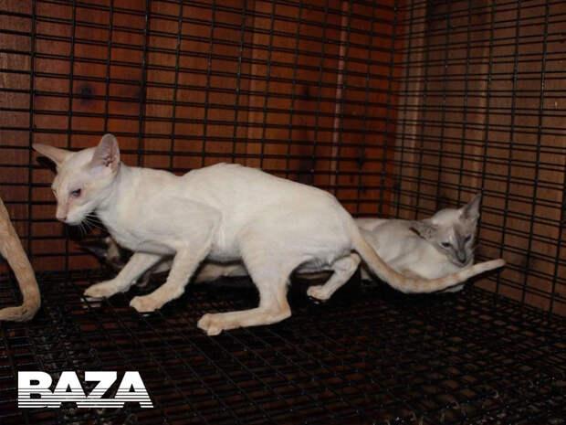 Две кошки умерли после полета «Аэрофлотом». Никого не накажут