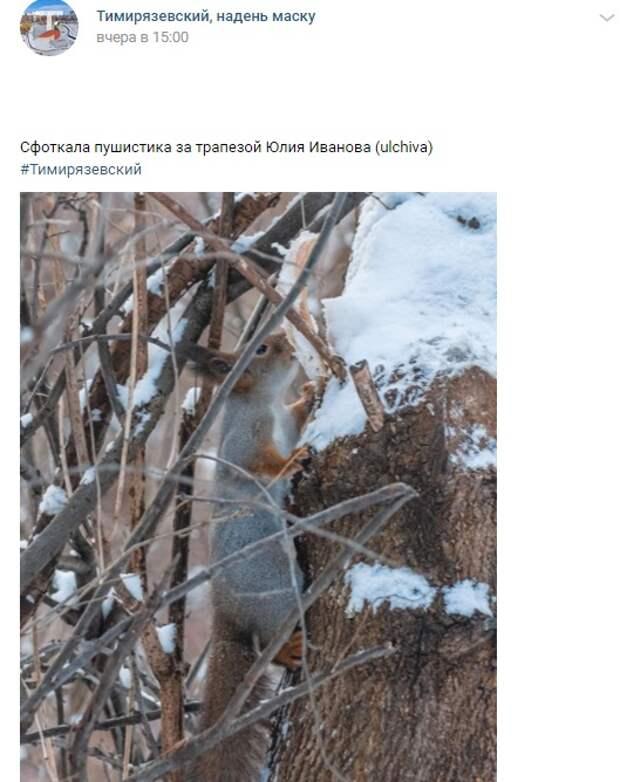 Фото дня: в Тимирязевском белки едят сало