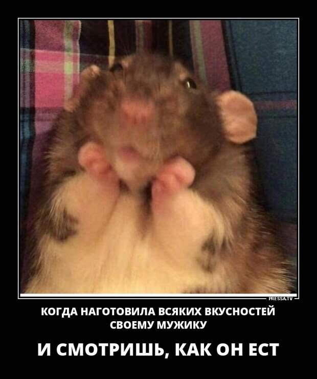 демотиваторы+