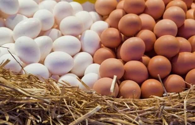 А вы какие яйца покупаете – белые или коричневые?