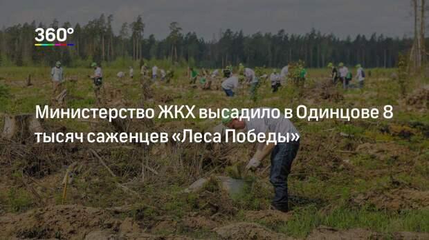 Министерство ЖКХ высадило в Одинцове 8 тысяч саженцев «Леса Победы»
