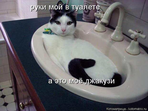 kotomatritsa_C7 (700x524, 261Kb)