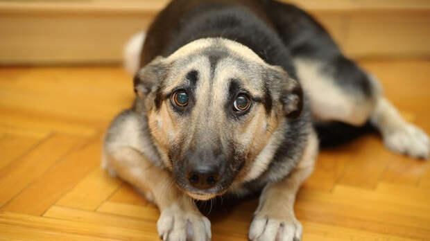 Слух у собак тоньше человеческого, поэтому излишне громкие звуки доставляют им дискомфорт