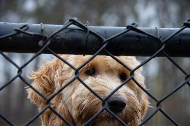 Решение одного из домов оградить двор от собачников не устроило других жителей микрорайона в Ижевске