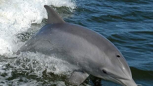 Трупы двух молодых дельфинов нашли на побережье в Анапе