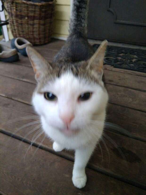 «Она мне изначально не понравилась!» — говорила девушка… А потом не смогла расстаться с кошкой!