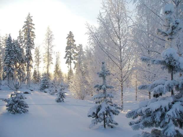 Часть регионов европейской части России накроет аномальное похолодание