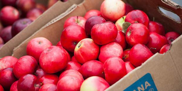 Подмосковные садоводы сдали на переработку 500 кубометров яблок