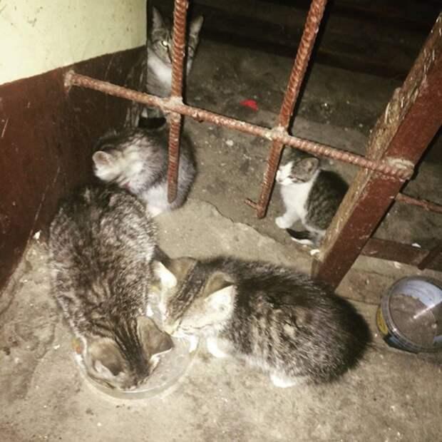 Маленькие худенькие котята в опасности. Молим о срочной помощи!