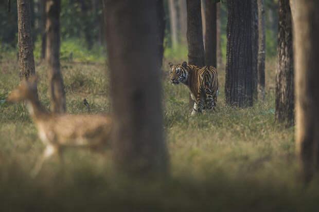 Сеони, Индия.