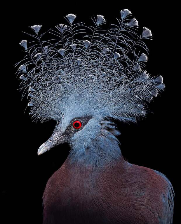 10+ невероятно красивых птиц, которым место на обложке журналов