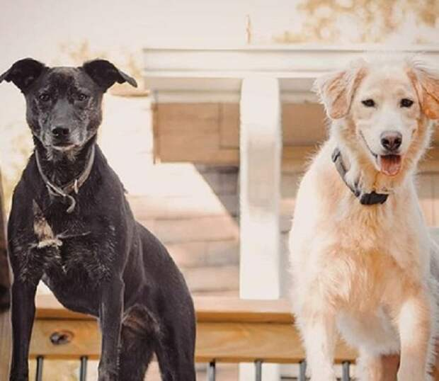 Собаки стоят
