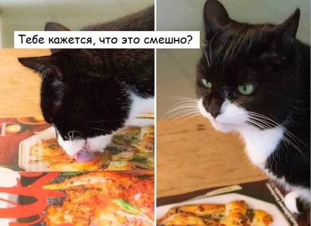13 котов-неудачников, у которых день не задался