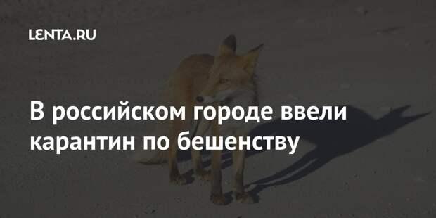 В российском городе ввели карантин по бешенству