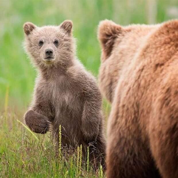 Никто не останется равнодушным к этим фотографиям: детеныши диких животных выглядят ну очень мило