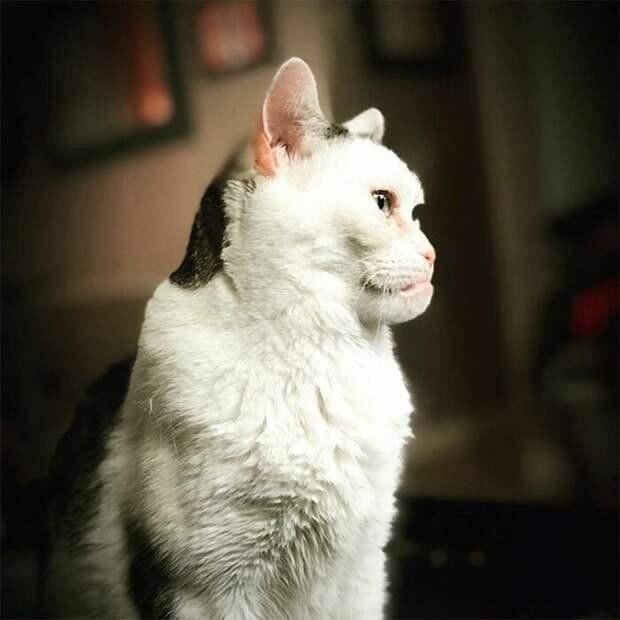 Сотрудники приюта заботились о Марле буквально с первых ее дней, после того как нашли брошенного котенка на улице Стив Бушеми, забавно, забавное сходство, кошка, напоминает, необычная внешность, необычная морда, сходство