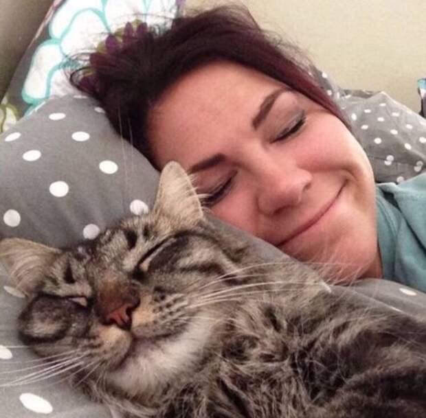 Кот спит на подушке