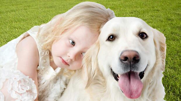 Лучший друг: особенности содержания лабрадора-ретривера в семье с детьми