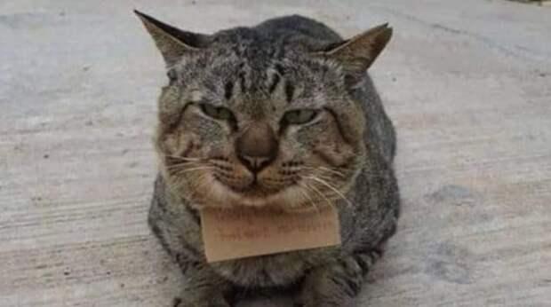 Кот ушёл из дома на прогулку, а когда вернулся, на его шее болталась записка
