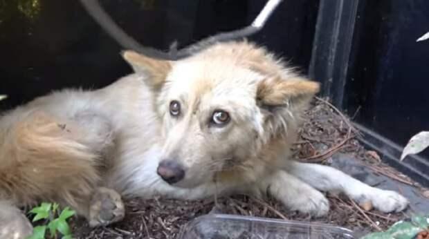 Кто-то ударил собаку и спокойно ушёл. А пёс в оцепенении остался лежать, ожидая помощи
