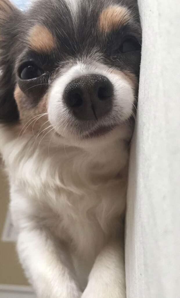 40 собак икошек, вглазах которых светятся любовь иобожание