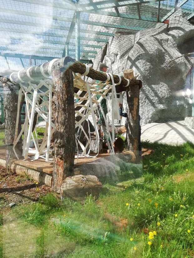 Всё в дом: гамак для орангутана в зоопарке Ижевска сплетут из отслуживших пожарных рукавов