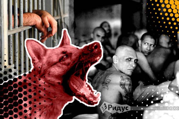 Тюремные университеты: нужна ли стаду свобода