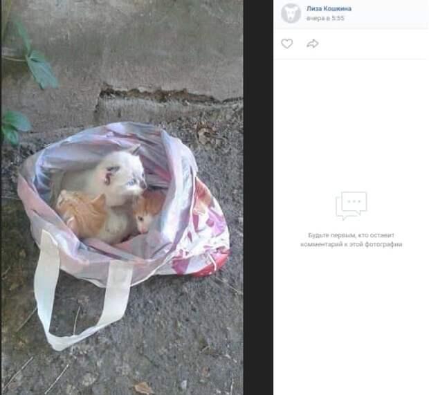 Волонтёр забрала домой котят, выброшенных у станции Планерная