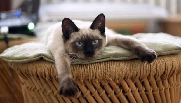 NYT: американский ветеринар выявил 95% сходства ДНК человека и кошки