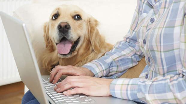 Приучите собаку к фейерверкам с помощью видеороликов