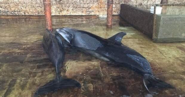 Карадагский дельфинарий решили не наказывать за «некрасивую» воду