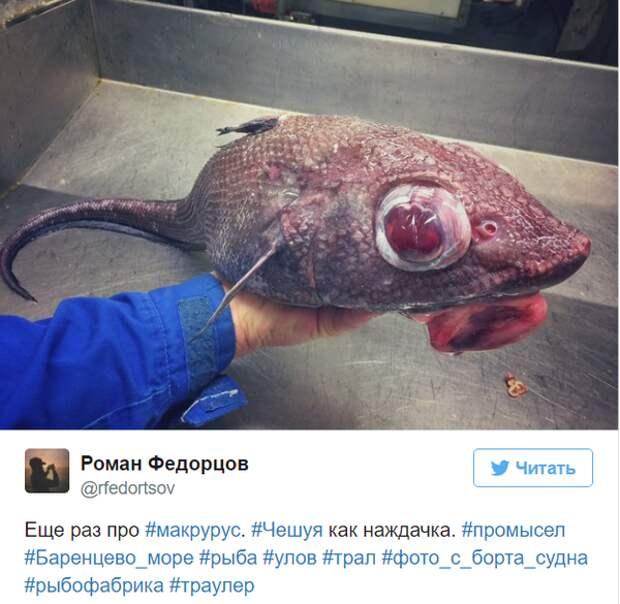 Невероятные монстры: российский моряк публикует снимки самых диковинных существ, попадающих в сети twitter, Социальные сети, вода, монстр, рыба, рыбак