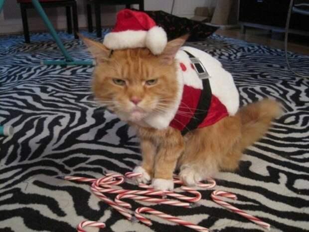 Ох зря ты, хозяин, это сделал! животные, не любят, новый год, планы, смешные, фото