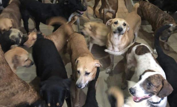 Мужчина решил помочь животным укрыться от урагана и пустил домой 300 собак