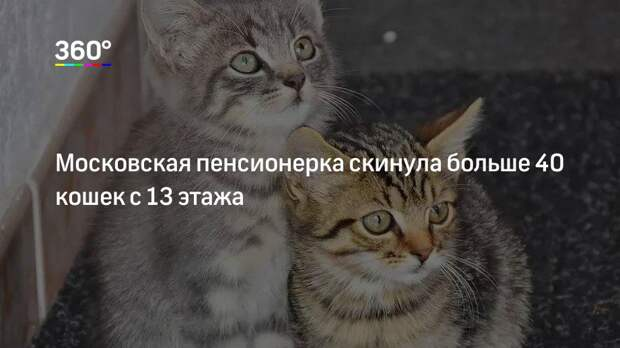 Московская пенсионерка скинула больше 40 кошек с 13 этажа