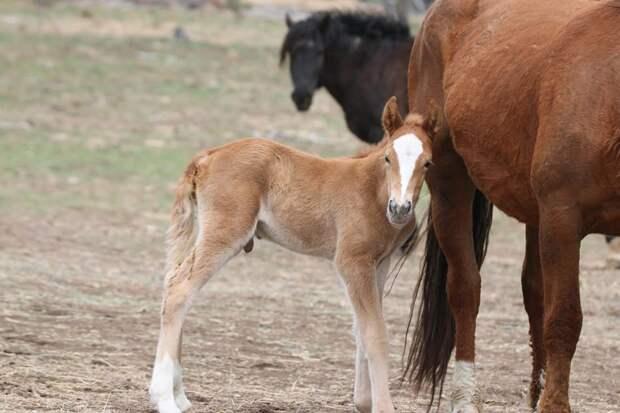 Их разлучили на полгода… Встреча кудрявого коня с его любимой закончилась сюрпризом!