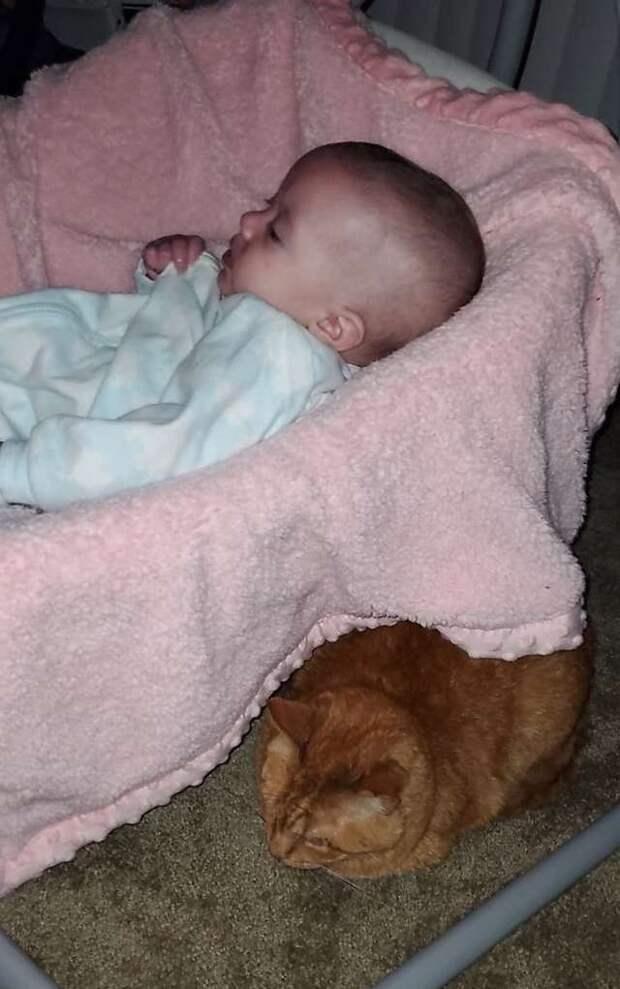 кот рядом с ребёнком