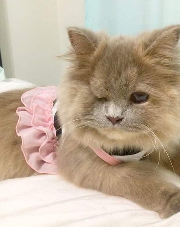 Котёнок, найденный в кустарнике, был похож на несчастного совёнка…